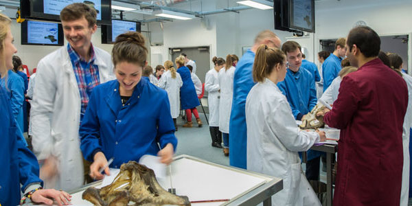 5 Steps to Become a Veterinary Technician